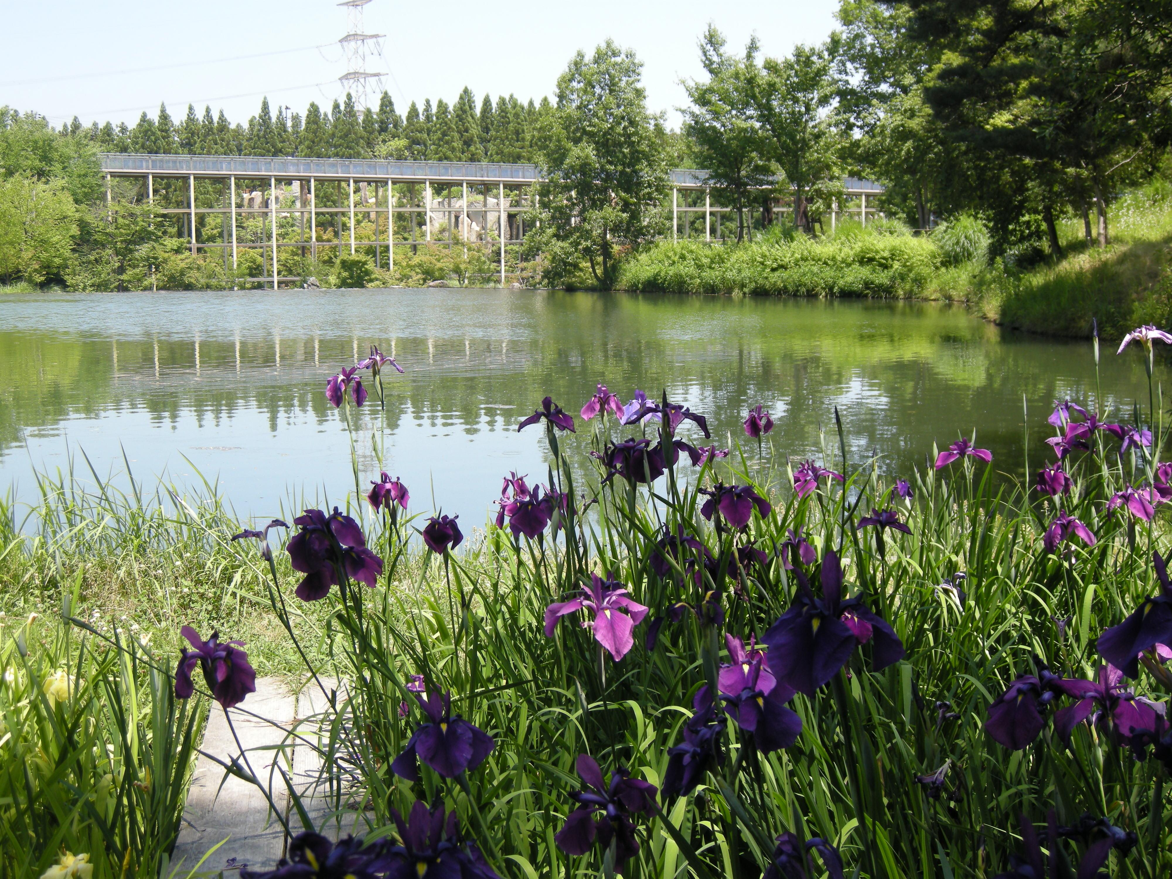 〈1組限定〉けいはんな記念公園ガイド -日本庭園・里山の楽しみ方-