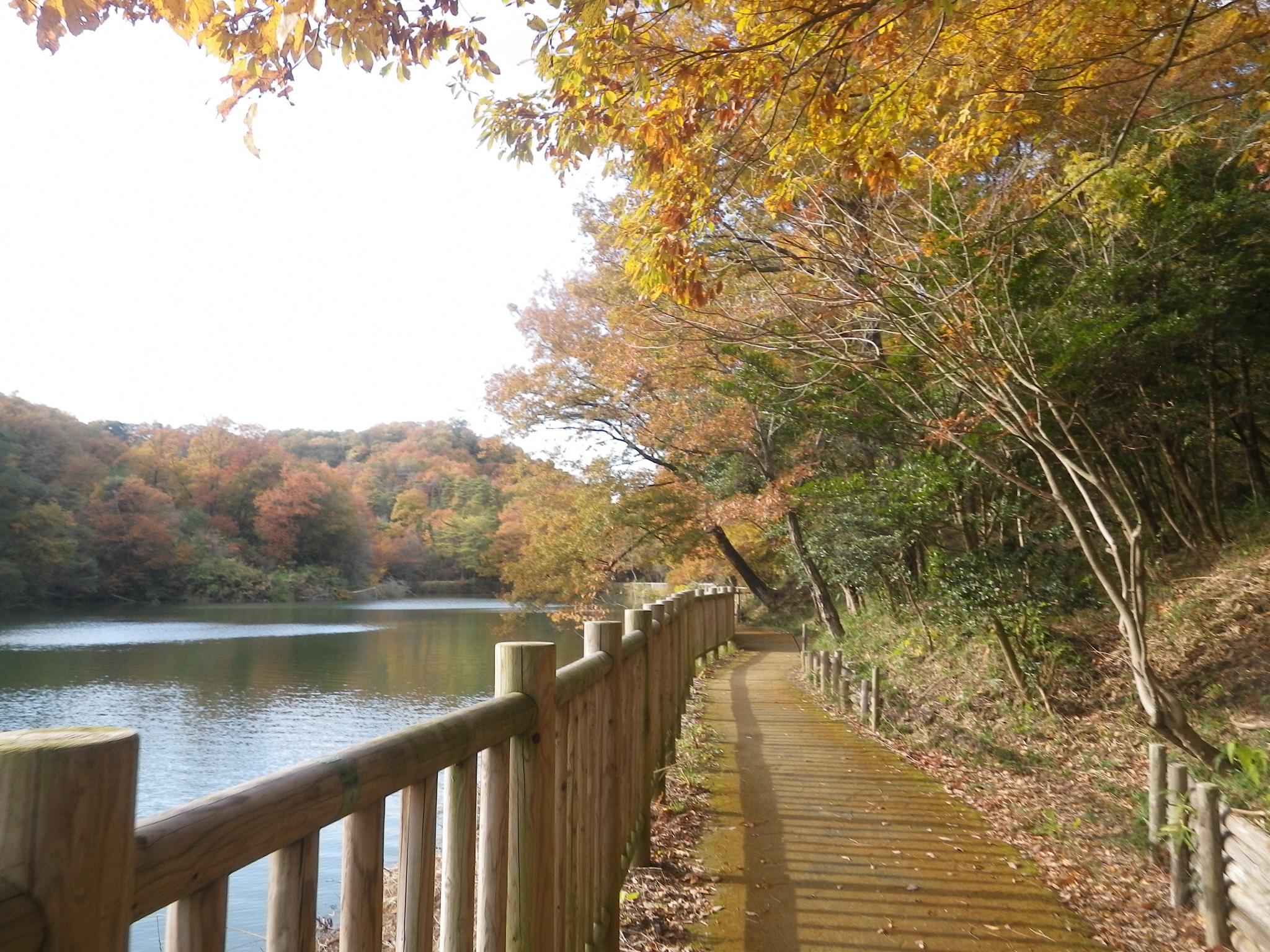 〈1組限定〉けいはんな記念公園ガイド -季節の里山と生き物-