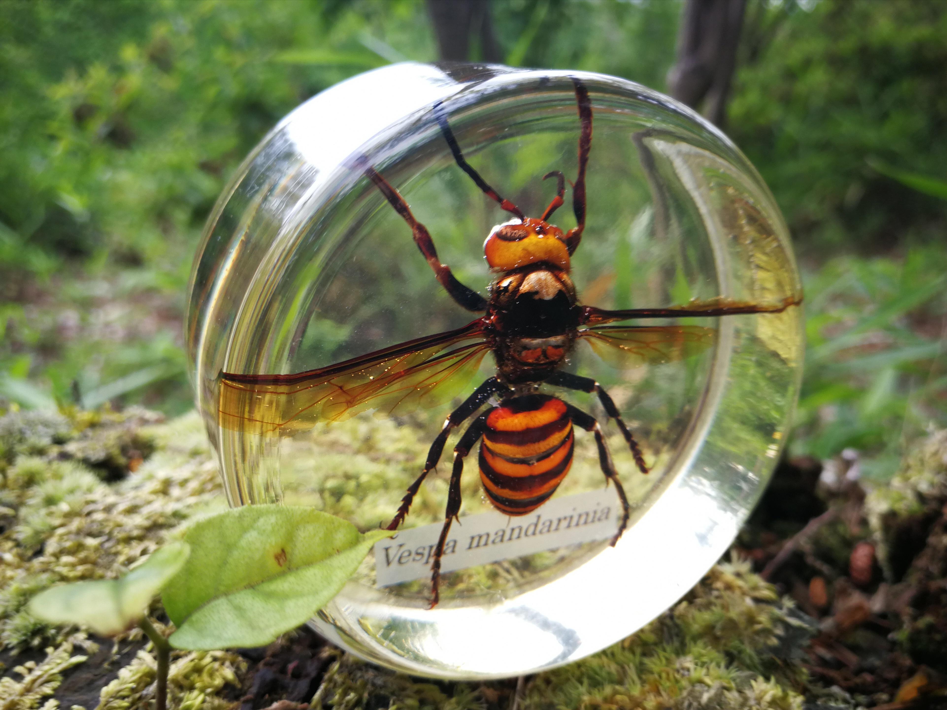 昆虫の樹脂標本